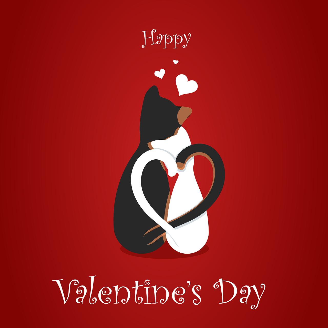 Gatti San Valentino Foto di LumoSpark da Pixabay